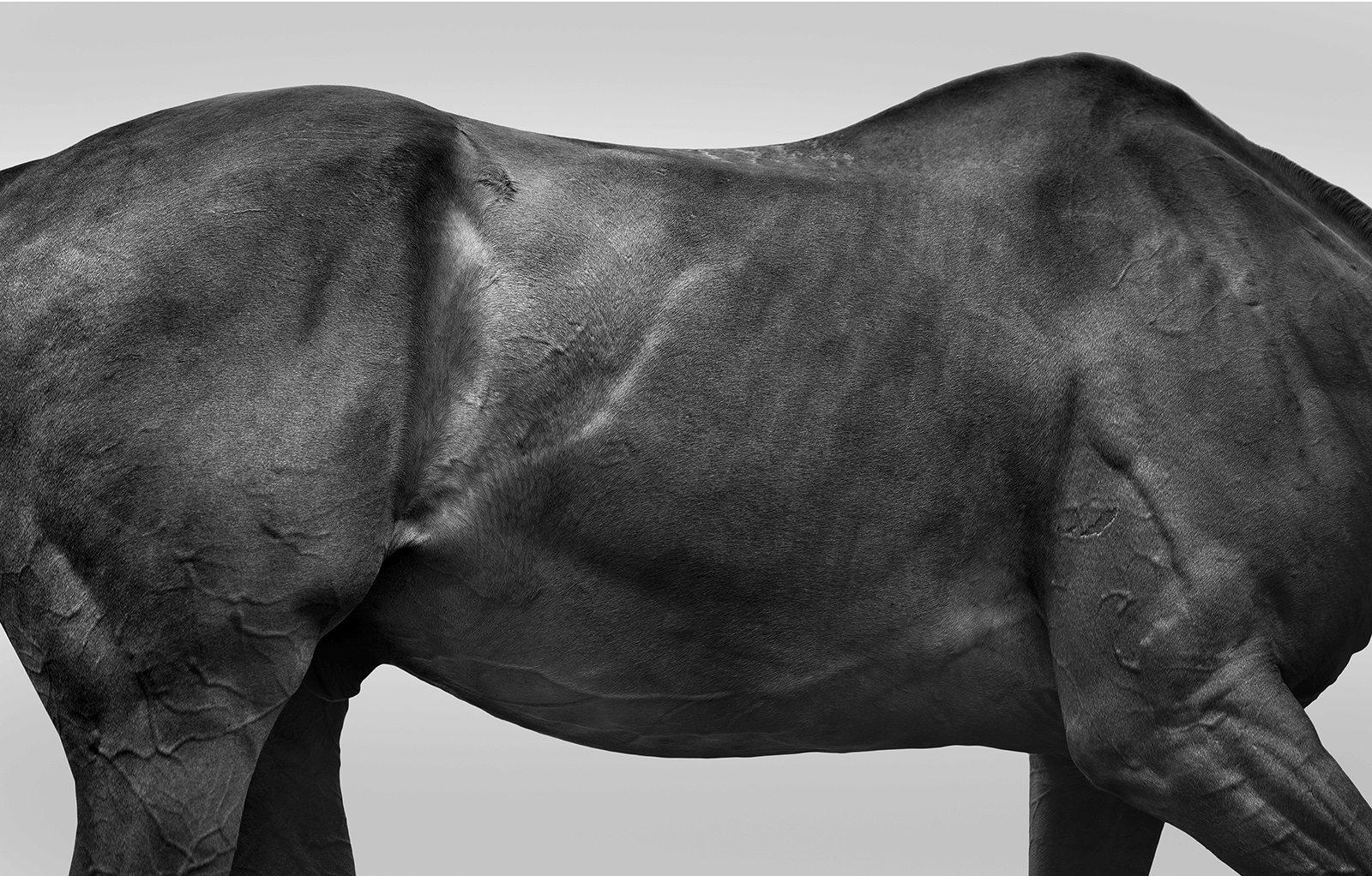 original-horse_torso-72dpi
