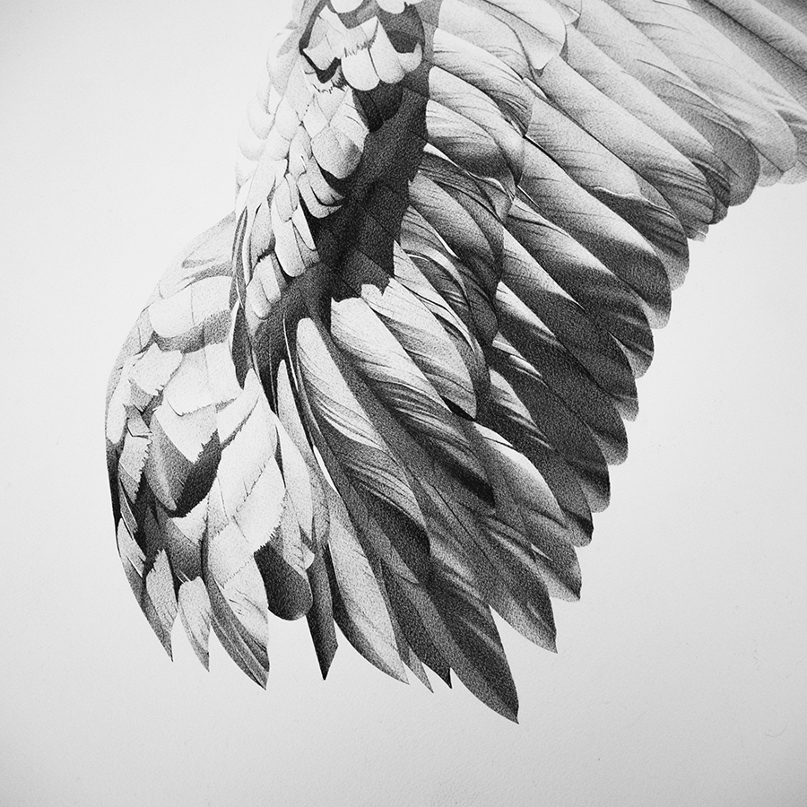 wing_white1