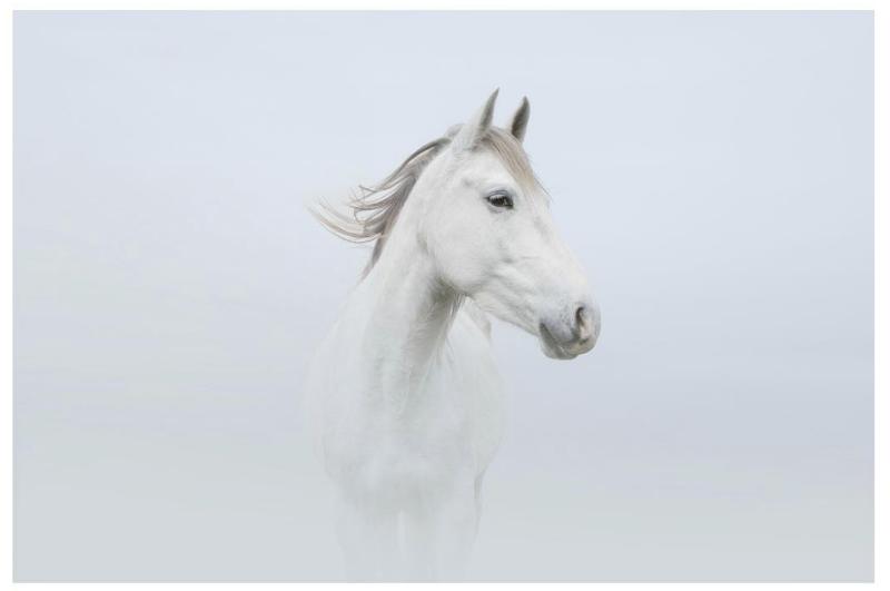 White Horse Print Petros Koublis The Cool Hunter The Cool Hunter